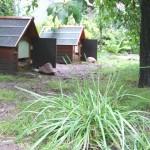 Landschildkröten in Berlin