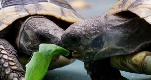 Landschildkröten & Kinder