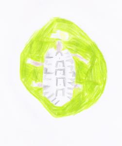 Schildkröten - M.S. (8 Jahre)