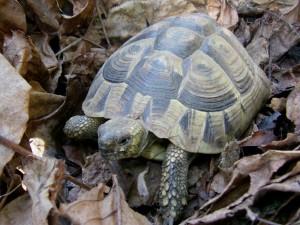 Diese Landschildkröte ist nach dem Aufwachen im Kompost gelandet!