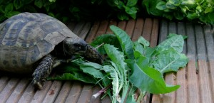Machen Schildkröten viel Arbeit?