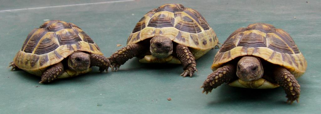 Wo kann und sollte man kleine Landschildkröten kaufen?